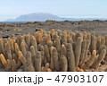 ガラパゴス 自然 風景の写真 47903107