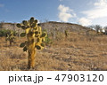 ガラパゴス諸島 自然 風景の写真 47903120