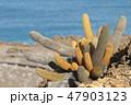 ガラパゴス 自然 晴れの写真 47903123