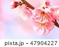 梅 春 花の写真 47904227