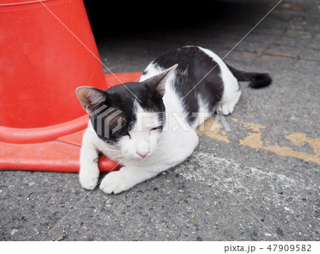The little white and black cat lies down on road. 47909582
