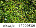 Tree leaves wall. Green tree background. 47909589