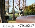 公園で遊ぶ男の子 47910217