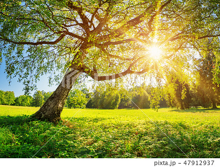 Tree foliage in morning light 47912937