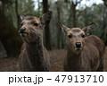 子鹿 47913710