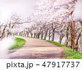 桜並木 47917737