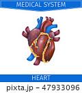 解剖学 心臓病学 心臓血管のイラスト 47933096