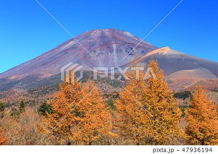 世界遺産 富士山 水が塚公園 紅葉 47936194