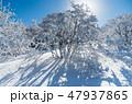 明神平の霧氷風景 47937865