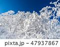 明神平の霧氷風景 47937867