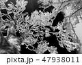 モノクロ風景写真 47938011