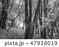 モノクロ風景写真 47938019