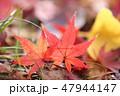 落ち葉 葉 秋の写真 47944147