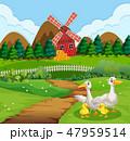 Duck family at farmland 47959514