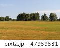 野原 運動場 畑の写真 47959531