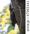 リス 動物 哺乳類の写真 47965441