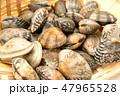 貝 シーフード 魚介類の写真 47965528