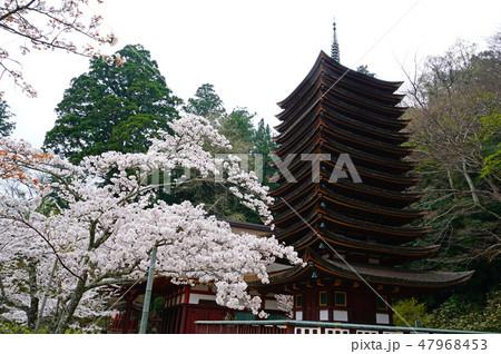 談山神社 桜 春 47968453