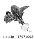 かぶ 野菜 葉付きのイラスト 47971098
