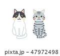 アメリカンショートヘア シャム猫 猫のイラスト 47972498