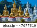 仏 釈迦 ブッダの写真 47977619