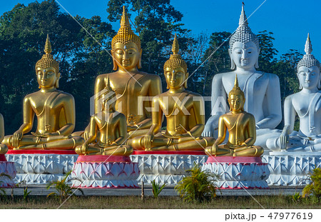 gold and white Buddha statues in the field 47977619