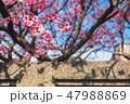 ハナ 花 人ごみの写真 47988869