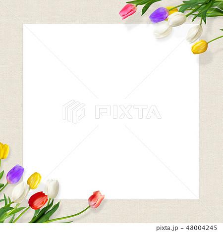 背景-花-麻布-春-チューリップ-フレーム-白バック 48004245