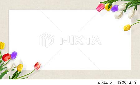 背景-花-麻布-春-チューリップ-フレーム-白バック 48004248