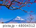 (静岡県)岩本山公園の梅と富士山 48004312