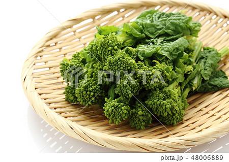 菜の花 48006889