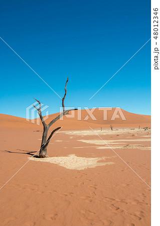 ナミビア ナミブ砂漠 死の沼 デッドフレイ 48012346