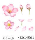 桜 花 春のイラスト 48014501