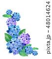 紫陽花 花 植物のイラスト 48014624