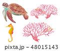 海のいきもの-ウミガメ、サンゴ、タツノオトシゴ 48015143
