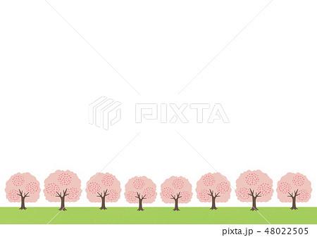 桜・桜の木・桜並木・お花見のイラスト 48022505