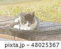 子猫のイラスト 48025367