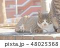 子猫のイラスト 48025368