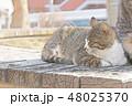 子猫のイラスト 48025370