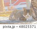 子猫のイラスト 48025371