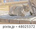 子猫のイラスト 48025372