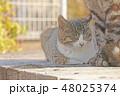 子猫のイラスト 48025374