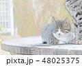 子猫のイラスト 48025375