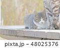 子猫のイラスト 48025376