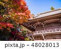 高尾山 薬王院 紅葉の写真 48028013