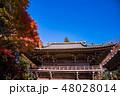高尾山 薬王院 紅葉の写真 48028014