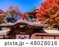 (東京都)紅葉した高尾山 薬王院 48028016