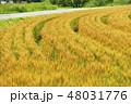 麦畑 畑 麦の写真 48031776