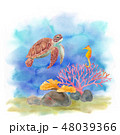 海の生き物-ウミガメとタツノオトシゴ 48039366
