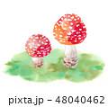 赤いキノコと苔-ベニテングダケ 48040462